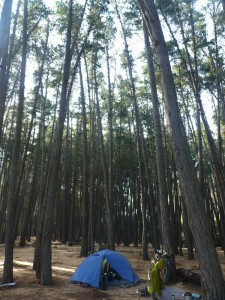 One night we camped among these really tall pine trees