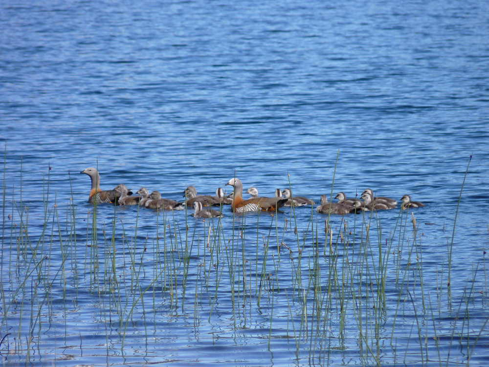 A family outing on Lago Villarino, Argentina